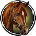 Arabian Horse Wallpaper icon
