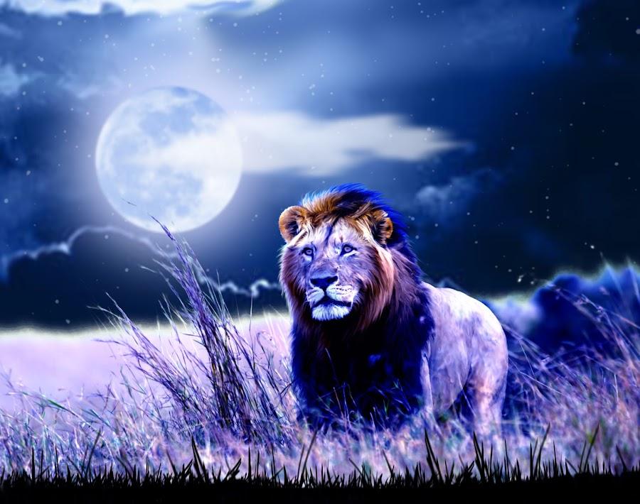 Contemplative Lion by Charlie Alolkoy - Illustration Animals ( savannah, lion, moon, sky, grass, night, africa )