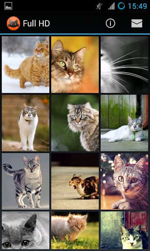 【免費個人化App】Коты обои Full HD-APP點子