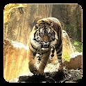 Tigres Papel de Parede Vivo icon
