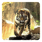 Tigres Fondo Animado icon