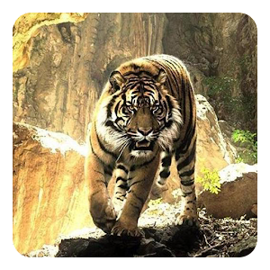 Tigers Live Wallpaper HSrden-GVv_Awzde_-bj
