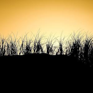 silhouette 4b.jpg