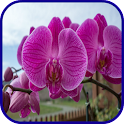 Orchid Wallpaper icon