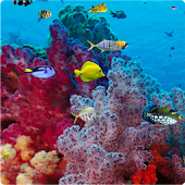 Ocean Live Wallpaper.apk