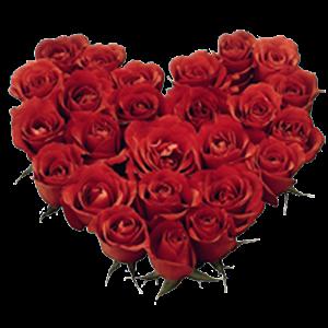 Roses Live Wallpaper HcD3Kuos0VHKmlN62H3O