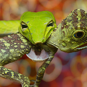 by Cikgu Al - Animals Amphibians