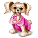 Touch Animals icon