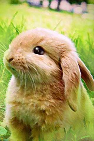 How To Draw Cute Rabbit Bunny