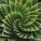 Green Spiral rs.jpg