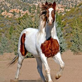 Spirit by Michelle Hunt - Animals Horses