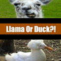 Llama Or Duck? icon