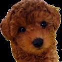 狗知識 icon