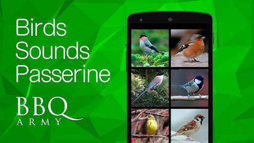Birds Sounds 2 Passerine