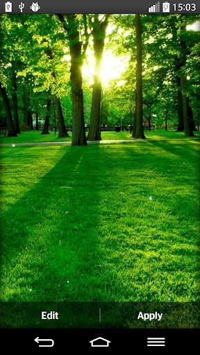 森林的動態壁紙