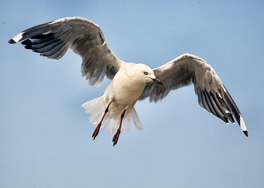 by Michael Karakinos - Animals Birds