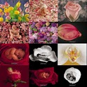 Flowers Baby Wallpaper icon