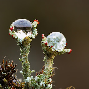 Two towers by Jiří Míchal - Nature Up Close Mushrooms & Fungi ( devils match, fungi, drops, two drops )