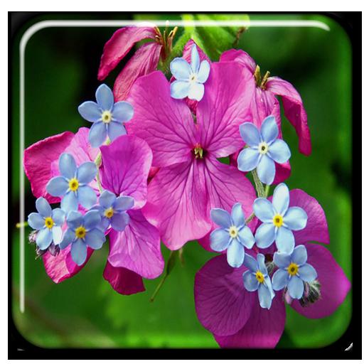 春天的花朵動態壁紙 個人化 App LOGO-硬是要APP