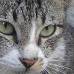 Cat-ching.jpg