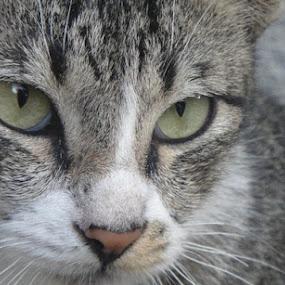 Cat-ching by Empty Deebee - Animals - Cats Portraits ( catz )