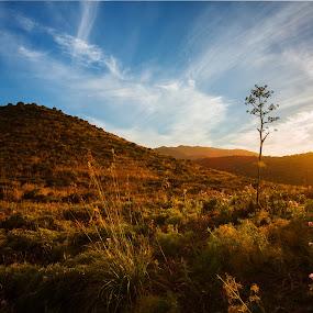 Solar energy by Gabriele Copez - Landscapes Mountains & Hills ( #energy, #hills, #golden, #sardegna, #sky, #sunlight, #sun, #italy, #ray )