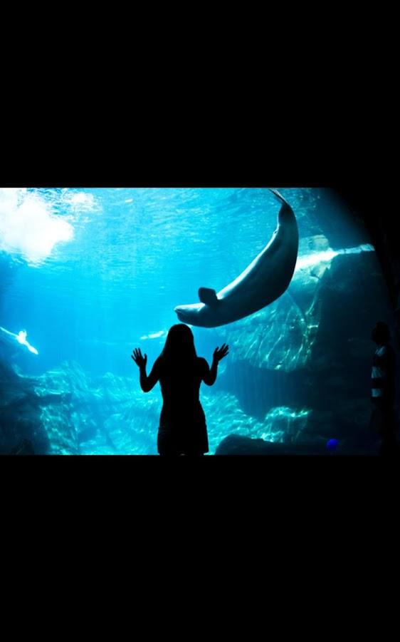shark aquarium live wallpaper - photo #18