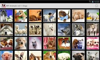 Screenshot of Wallpapers Animals Series 1