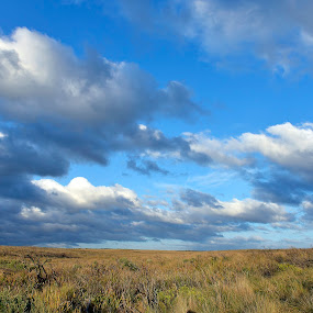 No Boundaries by Leonardus Cung - Landscapes Prairies, Meadows & Fields ( blue sky, bushes, grass, landscape photography, landscape )