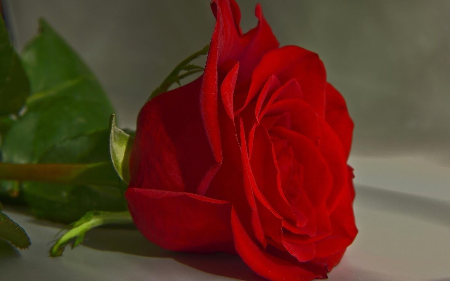 Rose Wallpaper Android Apps On Google Play