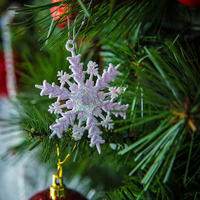 Snowflakes by Jennifer Bacon - Public Holidays Christmas ( holiday, tree, ornament, christmas, snowflake )
