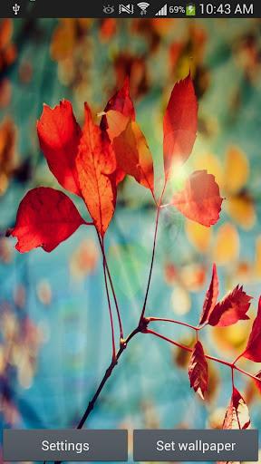 S4 Red Leaf Live Wallpaper