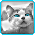 Tile Puzzle: Cute Kittens 2