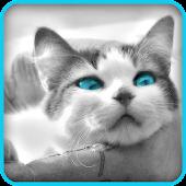 Pussel: gulliga kattungar 2