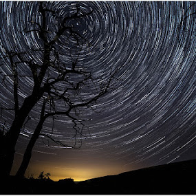 Stage Tree by George Herbert - Landscapes Starscapes