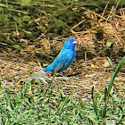 Unnamed spotting