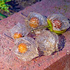 Chinese lantern fruits