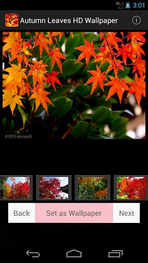 秋の紅葉の壁紙 in京都