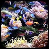 Submarine World Live Wallpaper