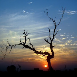 Clinging to Hope by Kashif Ghauri - Landscapes Sunsets & Sunrises ( lahore, nature, colorful, color, autumn, silhouette, sunset, fall, evening, lonely tree )
