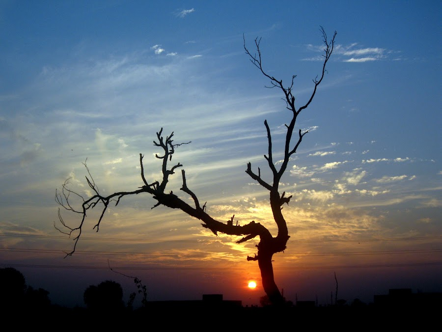 Clinging to Hope by Kashif Ghauri - Landscapes Sunsets & Sunrises ( lahore, nature, colorful, color, autumn, silhouette, sunset, fall, evening, lonely tree,  )