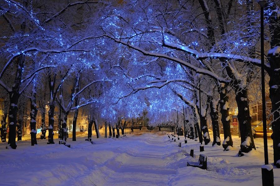 Blue alley by Teo Niklus - City,  Street & Park  City Parks ( winter, led, street, night, tallinn, city )
