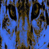 Snow Leopard LWP
