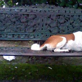 by Devol Nath - Animals - Dogs Portraits