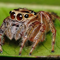 International Spider Survey