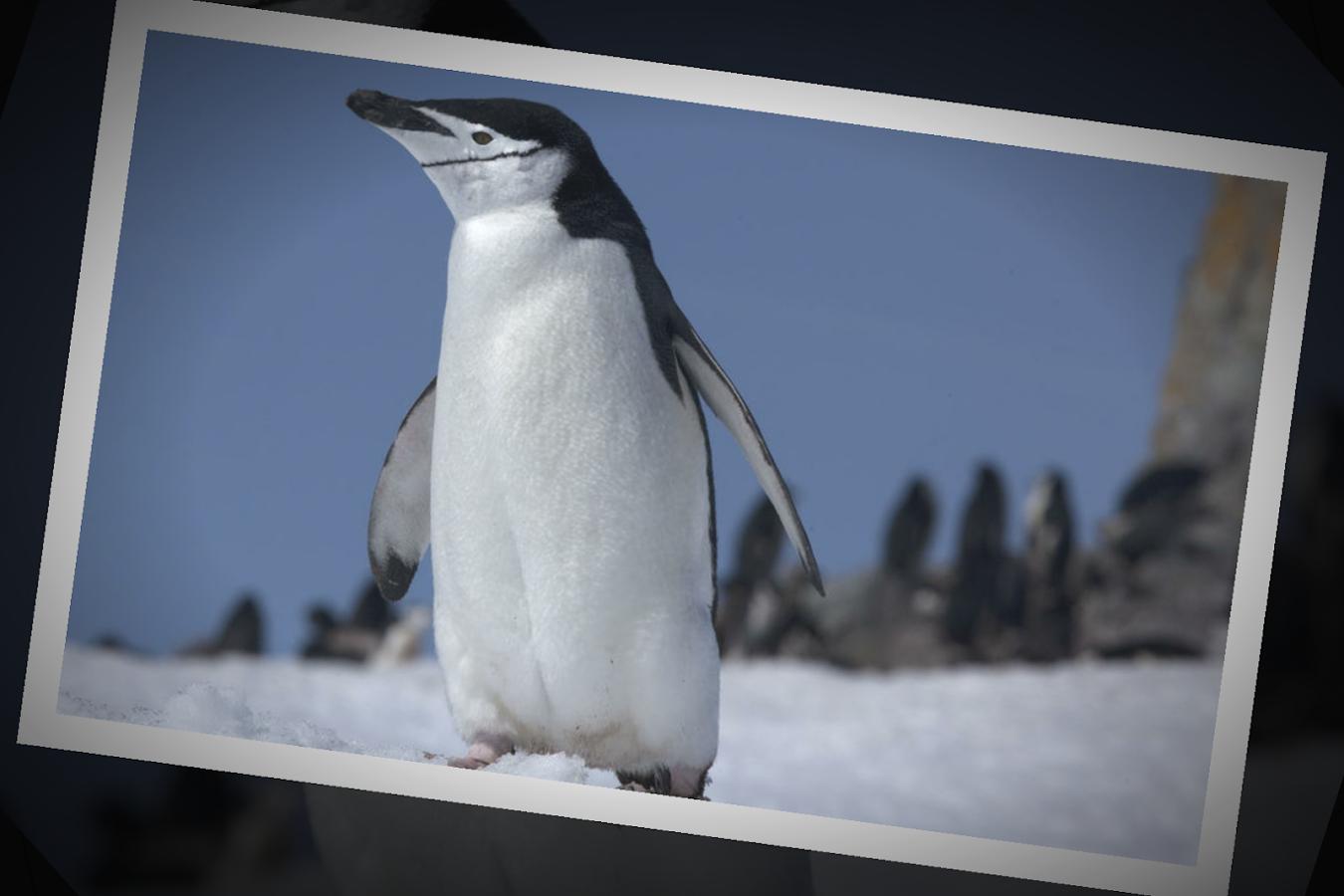 cloud digital photo frame pro screenshot