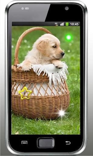 Cute Puppies HD live wallpaper