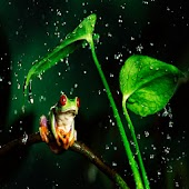 3D lovey Frog
