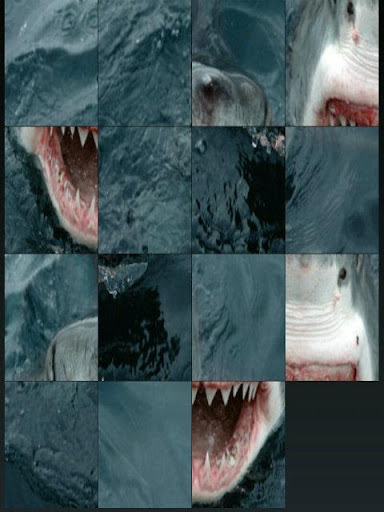 Shark Hunt Return puzzle
