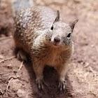 Squirrel HD Wallpaper icon